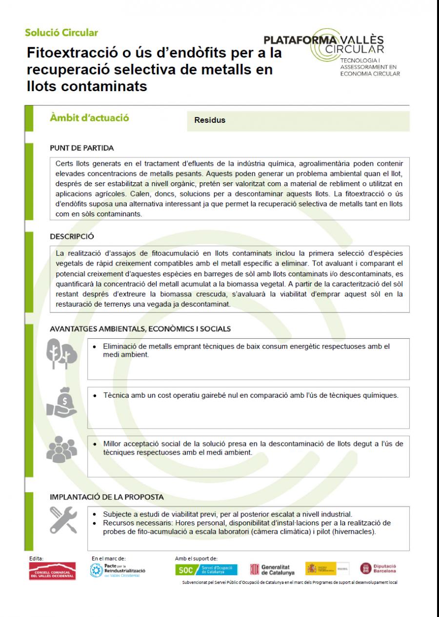 Fitoextracció o ús d'endòfits per a la recuperació selectiva de metalls en llots contaminats